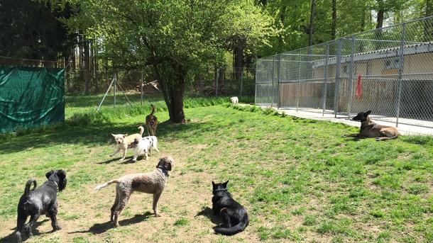 dogslearndogs - Alte Kompetenz am neuen Ort