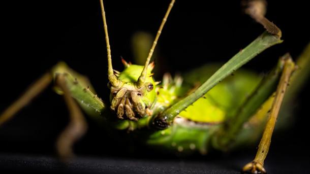 Insektenkultur - Die verborgene Welt des Kleinen