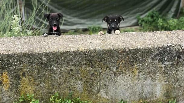 Futter und Wärmespender für Hunde