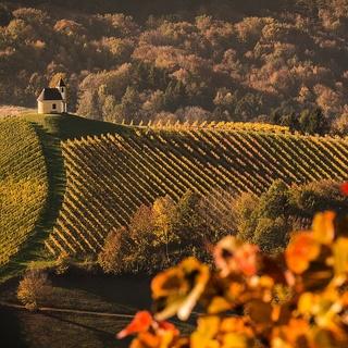 1 Woche für 2 Personen auf dem Weingut
