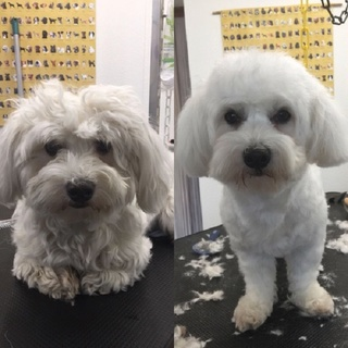 Hund baden, schneiden, scheren bei Eveline Willi - Hundecoiffeuse