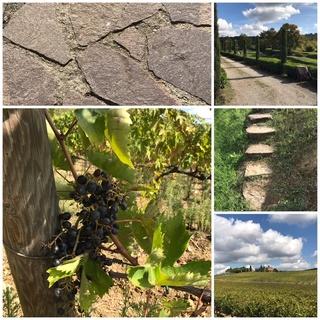 Weindegustation - Sudlage.ch